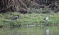 Birds from Nepal at Chitwan (9).jpg
