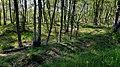 Birken im renaturierten Moor FFH-Gebiet Tarbeker Moor.jpg