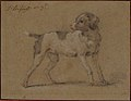 Black and White Dog, Head Turned to the Left MET 64.244.jpg