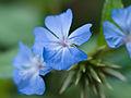 Blue flower (9886082944).jpg