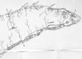 Bois - L'Île d'Orléans 1895 page 159.png