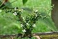 Bonsai - Flickr - Alejandro Bayer.jpg