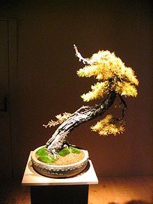 Deadwood Bonsai Techniques Wikipedia