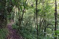 Bosque Eterno De Los Ninos 04.jpg