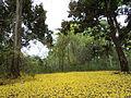 Bosque amarillo..JPG