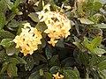 Bouquet de Novia Amarillo.jpg