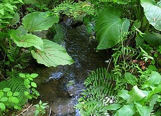 Bowmans Hill Wildflower Preserve