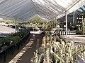 Boyce Thompson Arboretum, Superior, Arizona - panoramio (3).jpg
