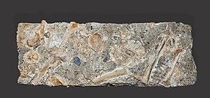 Lombrives - Homo sapiens Bronze age, Noulet 1882 MHNT