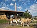 Brasilia DF Brasil - Restaurante Mangai - panoramio (1).jpg