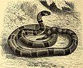 Brehms Tierleben - allgemeine Kunde des Tierreichs - mit 1800 Abbildungen im Text, 9 Karten und 180 Tafeln in Farbendruck und Holzschnitt (1892) (19792093274).jpg