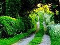 Bridle Path near Chebbards Farm - geograph.org.uk - 1320773.jpg