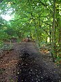 Bridleway, Foot of Wolstonbury Hill - geograph.org.uk - 933390.jpg