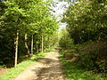Bridleway in Chevin Country Park - geograph.org.uk - 177635.jpg