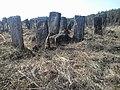 Brody cemetery 03.jpg