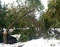 Buffalo snow storm11.jpg