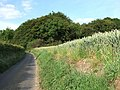 Bulbeggars Wood - geograph.org.uk - 190662.jpg