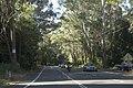 Bulli NSW 2516, Australia - panoramio (5).jpg
