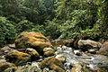Buluh River 2010.jpg