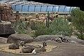 Burgers Zoo Desert Overzicht1.jpg
