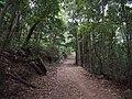 Burgh Track - panoramio (6).jpg