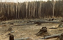 Burnt pine forest at Mount Macedon after the 1983 Ash Wednesday bushfires.jpg
