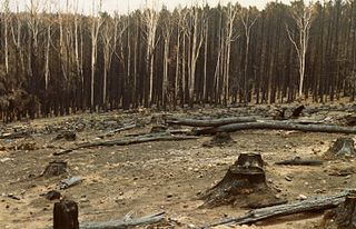 Ash Wednesday bushfires 1983 brushfires in Australia