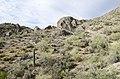 Butcher Jones Trail to Pinter's Point Loop, Tonto National Park, Saguaro Lake, Ft. McDowell, AZ - panoramio (51).jpg