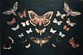 Butterflies, 1893.jpg
