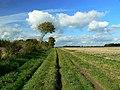 Byway from Windmill Hill, near Winterbourne Monkton - geograph.org.uk - 1010707.jpg