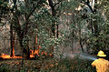 CSIRO ScienceImage 552 Fighting a Bushfire.jpg