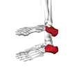 Calcaneus07 inferior view.png