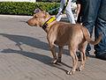 Caminata por los perros y animales Maracaibo 2012 (32).jpg