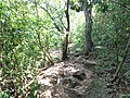 Camino sierra 2.jpg