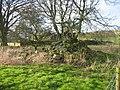 Camp Cottage Bastle (remains of) - geograph.org.uk - 120732.jpg