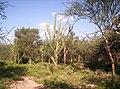 Campo adentro - panoramio.jpg