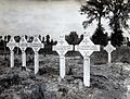 Canadian Corps - Canadian war graves.jpg
