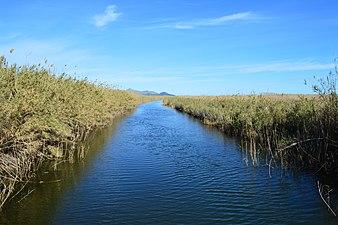 Canal del Parc Natural de s'Albufera de Mallorca.jpg