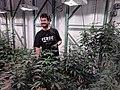 Cannabis grower at Verde Natural.jpg