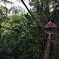 Canopy walkway at Peninsular Botanical Garden (Thung Khai),Trang - panoramio (1).jpg