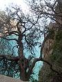 Cap Carbon derier les arbres, Wilaya de Béjaïa 1.JPG