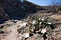 Carlsbad Caverns National Park and White's City, New Mexico, USA - 48345003417.jpg