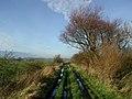 Carr Lane, Rimswell - geograph.org.uk - 300406.jpg