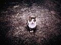 Cat - Flickr - bjimmy934.jpg