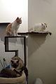 Cats (8258631478).jpg
