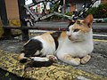 Cats in t1302Cats in the Philippines 21.jpg