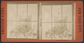 Central Park Menagerie, from Robert N. Dennis collection of stereoscopic views.png