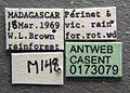 Cerapachys mayri casent0173079 label 1.jpg