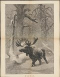 Cervus alces - 1873 - Print - Iconographia Zoologica - Special Collections University of Amsterdam - UBA01 IZ21500114.tif