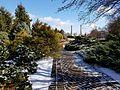 Chadwick Arboretum (32479376282).jpg